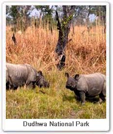 One-horned Rhino at  Dudhwa National Park