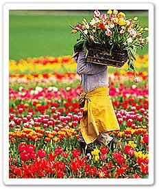 flower-valley.jpg