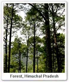 forest-himachal.jpg
