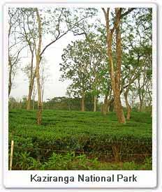 forest-kaziranga.jpg