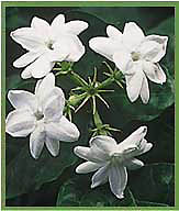 Plants In India Plants Of India Flora Of India Flowering Plants
