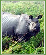 Kaziranga National Prk