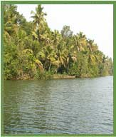 kochi-backwaters
