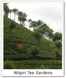 Tea Garden Villa in Kotagiri, TN near Ooty